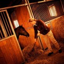 Feed type affects horses' behaviour