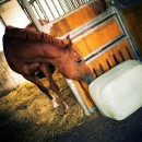 Hygienic quality of haylage autumn and spring