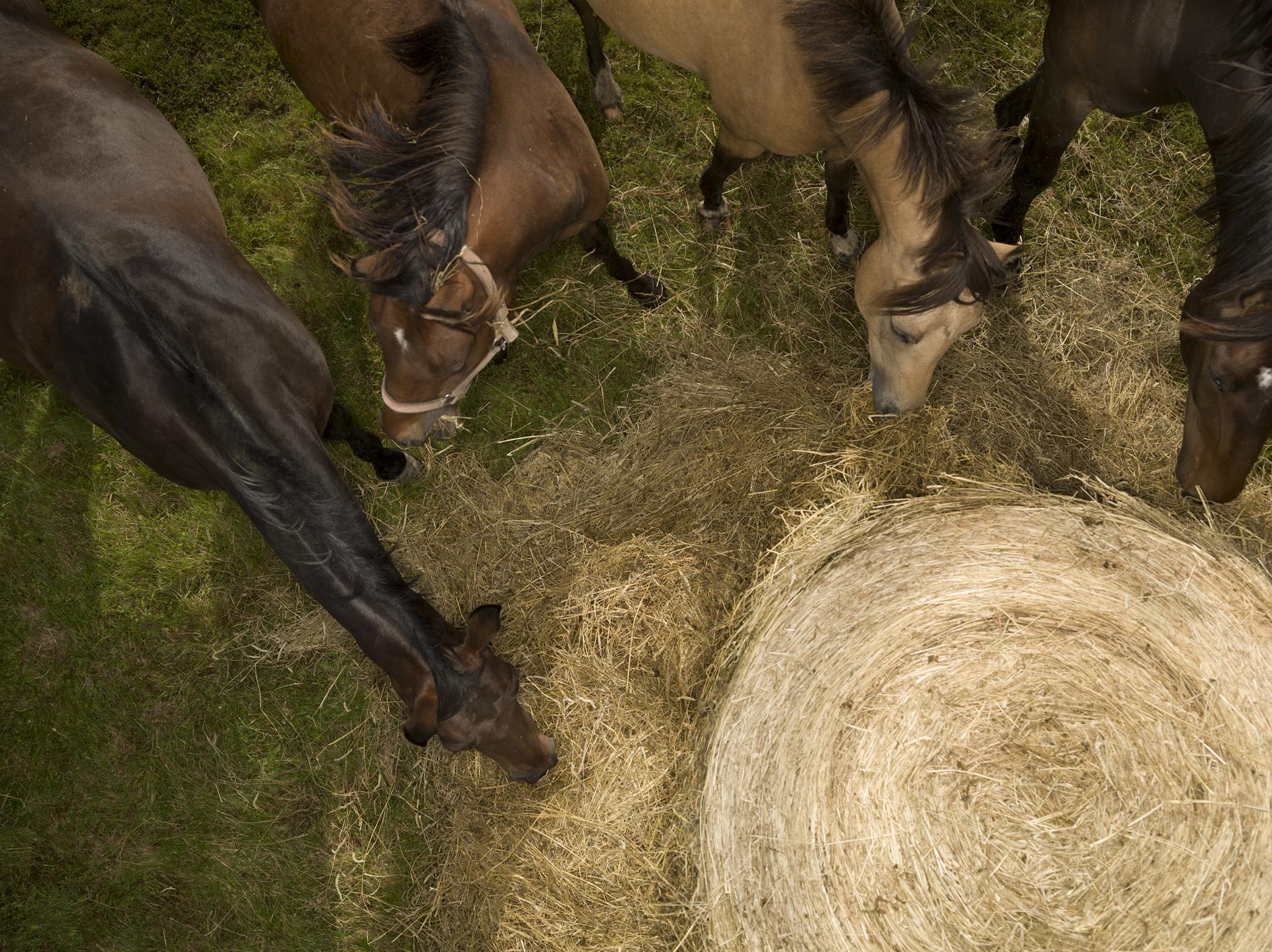 behavioural disturbances www forageforhorses   en