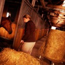 Reduced intestinal motility when stabling horses after pasture