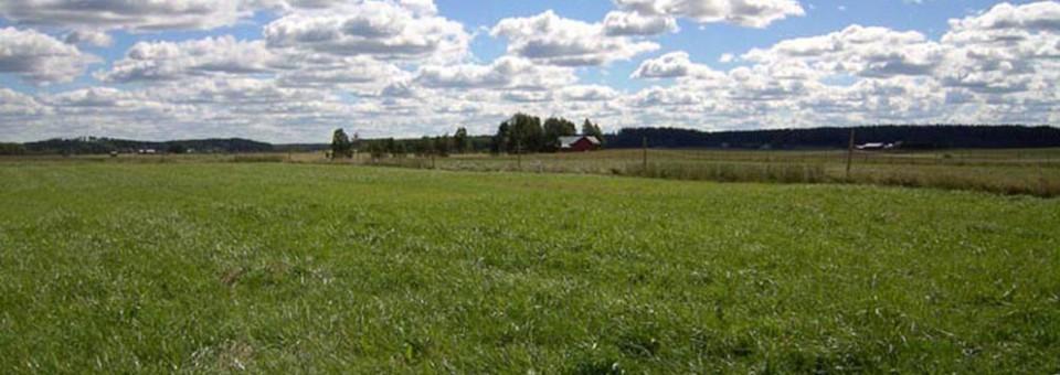 The benefits with grassland mixtures