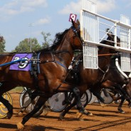 Forage intake in two year old trotters in training